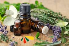 Descubre las propiedades de las plantas medicinales